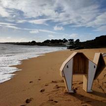 Dromadaire à la plage